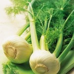 fennel_plant