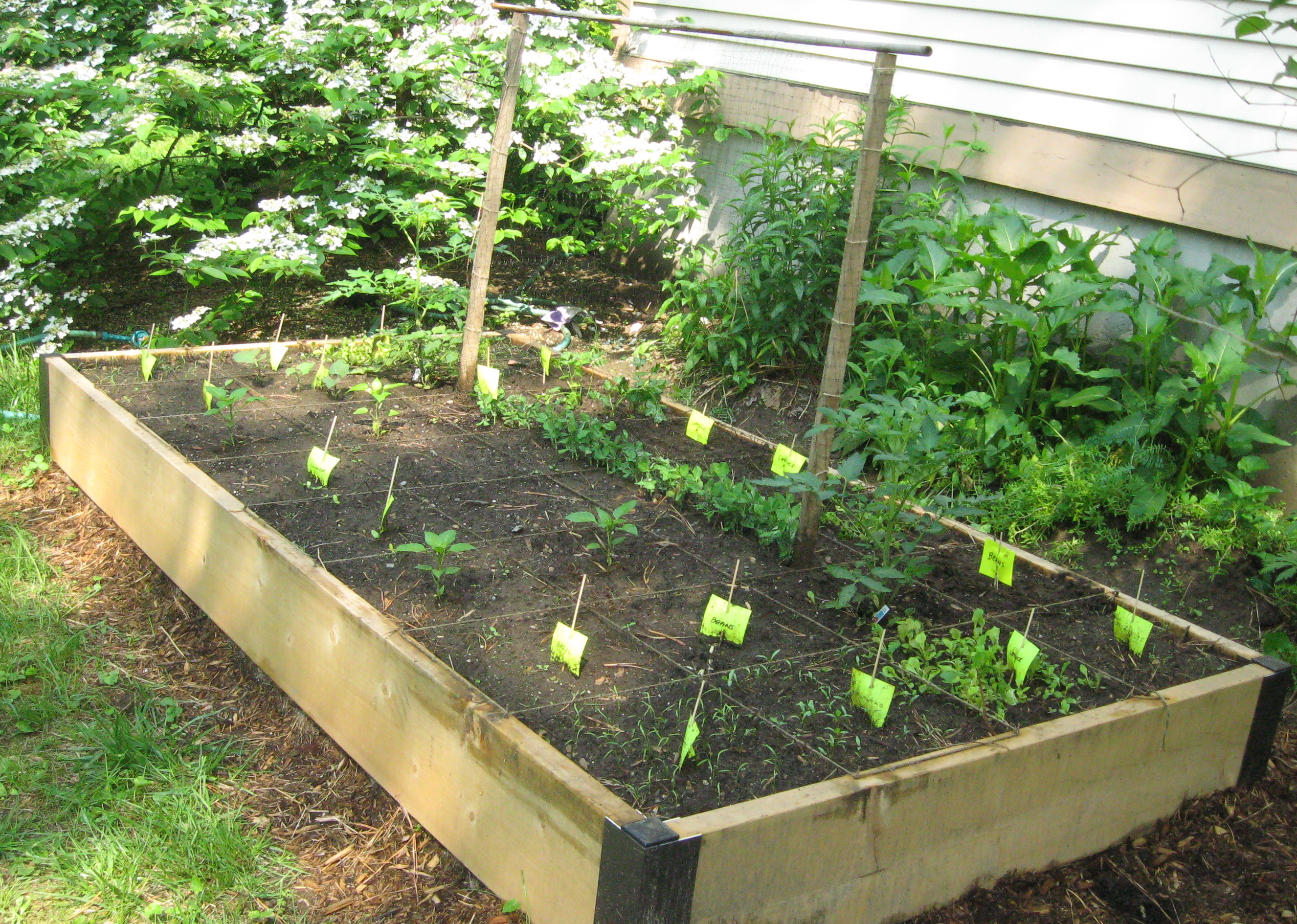 Eating vegan on a budget on Outdoor Vegetable Garden Ideas id=29870